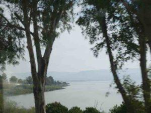 Psaume 1 – Comme un arbre planté auprès d'un courant d'eau